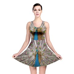 Indian Peacock Plumage Reversible Skater Dress by Simbadda