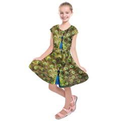 Peacock Bird Kids  Short Sleeve Dress by Simbadda