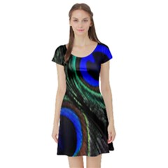 Peacock Feather Short Sleeve Skater Dress by Simbadda