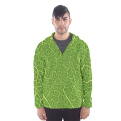 Green Leaf Line Hooded Wind Breaker (men) by Mariart