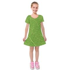 Green Leaf Line Kids  Short Sleeve Velvet Dress by Mariart