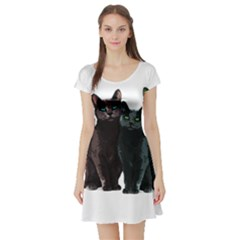 Cats Short Sleeve Skater Dress