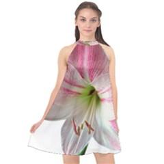 Flower Blossom Bloom Amaryllis Halter Neckline Chiffon Dress