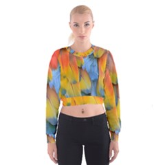 Spring Parrot Parrot Feathers Ara Cropped Sweatshirt by Nexatart