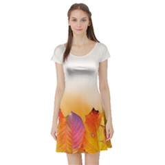 Autumn Leaves Colorful Fall Foliage Short Sleeve Skater Dress