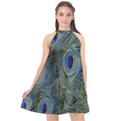 Peacock Feathers Blue Bird Nature Halter Neckline Chiffon Dress  by Nexatart