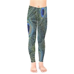 Peacock Feathers Blue Bird Nature Kids  Legging by Nexatart