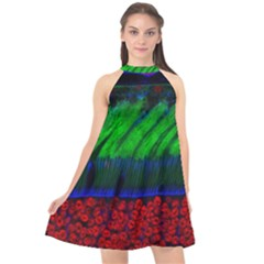 Cells Rainbow Halter Neckline Chiffon Dress