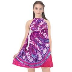 Histology Inc Histo Logistics Incorporated Masson s Trichrome Three Colour Staining Halter Neckline Chiffon Dress