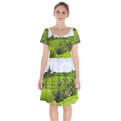 Bali Rice Terraces Landscape Rice Short Sleeve Bardot Dress by Nexatart