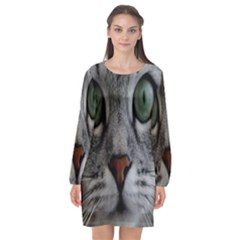 Cat Face Eyes Gray Fluffy Cute Animals Long Sleeve Chiffon Shift Dress  by Mariart
