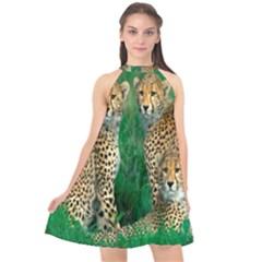 Animals Cheetah Halter Neckline Chiffon Dress  by Jojostore