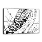Animal Bird Forest Nature Owl Canvas 18  x 12