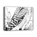 Animal Bird Forest Nature Owl Deluxe Canvas 14  x 11