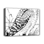 Animal Bird Forest Nature Owl Deluxe Canvas 16  x 12