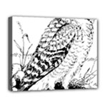 Animal Bird Forest Nature Owl Deluxe Canvas 20  x 16