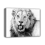 Lion Wildlife Art And Illustration Pencil Deluxe Canvas 14  x 11