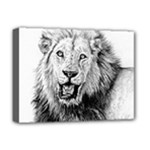 Lion Wildlife Art And Illustration Pencil Deluxe Canvas 16  x 12