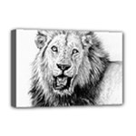 Lion Wildlife Art And Illustration Pencil Deluxe Canvas 18  x 12