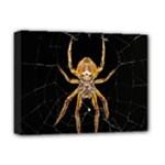 Insect Macro Spider Colombia Deluxe Canvas 16  x 12