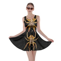 Insect Macro Spider Colombia Skater Dress by BangZart