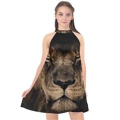 African Lion Mane Close Eyes Halter Neckline Chiffon Dress  by BangZart