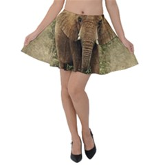 Elephant Animal Art Abstract Velvet Skater Skirt by Celenk
