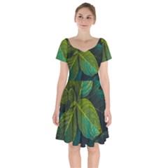 Green Plant Leaf Foliage Nature Short Sleeve Bardot Dress by Nexatart