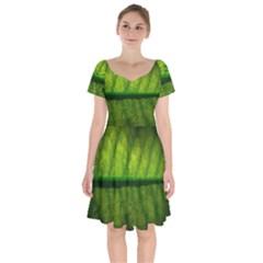 Leaf Nature Green The Leaves Short Sleeve Bardot Dress