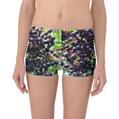 Elderberries Reversible Boyleg Bikini Bottoms by trendistuff