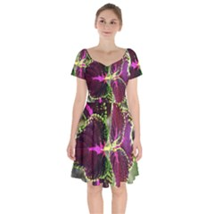 Plant Purple Green Leaves Garden Short Sleeve Bardot Dress by Nexatart