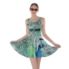 Peacock Skater Dress by chihuahuadresses