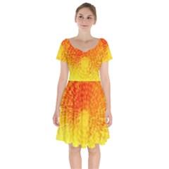 Abstract Explosion Blow Up Circle Short Sleeve Bardot Dress by Nexatart