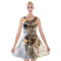 Funny Wet Sparrow Bird Velvet Skater Dress by FunnyCow