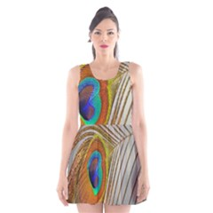Peacock Feather Feather Bird Scoop Neck Skater Dress by Sapixe