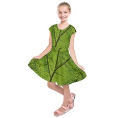 Butterbur Leaf Plant Veins Pattern Kids  Short Sleeve Dress