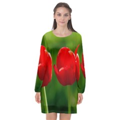 Three Red Tulips, Green Background Long Sleeve Chiffon Shift Dress  by FunnyCow