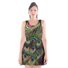 Peacock Feathers Color Plumage Scoop Neck Skater Dress by Celenk