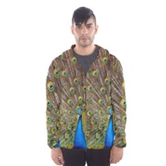 Peacock Plumage Bird Peafowl Hooded Windbreaker (men) by Wegoenart