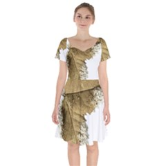 Leaf Edge Short Sleeve Bardot Dress by Jojostore