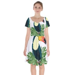 Tropical Birds Short Sleeve Bardot Dress