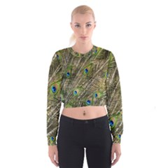 Green Peacock Feathers Color Plumage Cropped Sweatshirt by Pakrebo