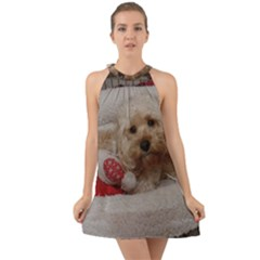 Cockapoo In Dog s Bed Halter Tie Back Chiffon Dress by pauchesstore