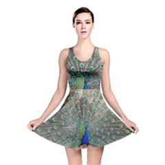 Peacock Bird Animal Feather Reversible Skater Dress by Pakrebo