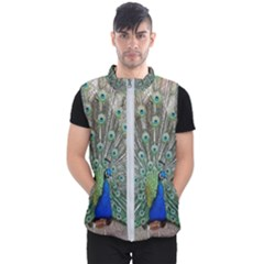 Peacock Bird Animal Feather Men s Puffer Vest by Pakrebo