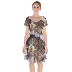 Sea Eagle Raptor Nature Predator Short Sleeve Bardot Dress by Pakrebo