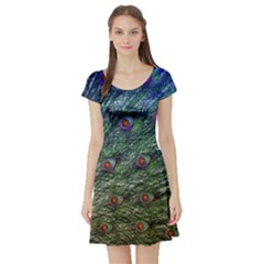 Peacock Feathers Colorful Feather Short Sleeve Skater Dress by Pakrebo