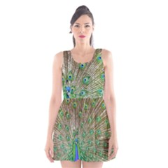 Peacock Color Bird Colorful Scoop Neck Skater Dress by Pakrebo