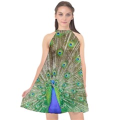 Peacock Color Bird Colorful Halter Neckline Chiffon Dress  by Pakrebo