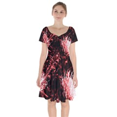 Red Thistle Short Sleeve Bardot Dress